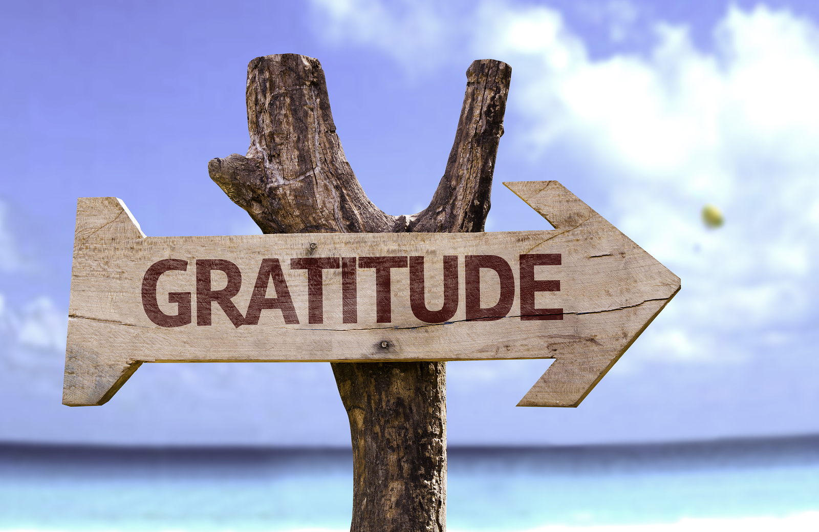 Gratitude Series Bonus!